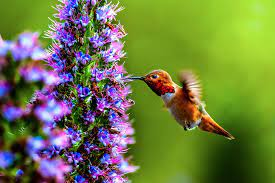 10 Best Plants That You Can Grow for Attracting Hummingbirds