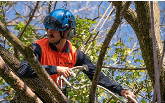 How Tree Bracing or Cabling is beneficial for your property?